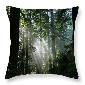 Rays In Redwoods Throw Pillow