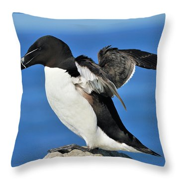 Razorbill Throw Pillow by Tony Beck