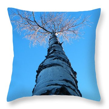 Reaching For The Light Throw Pillow by Brian Boyle