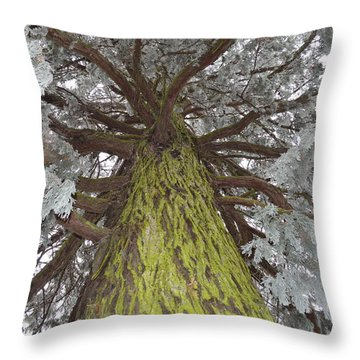 Throw Pillow featuring the photograph Ready For Christmas by Felicia Tica