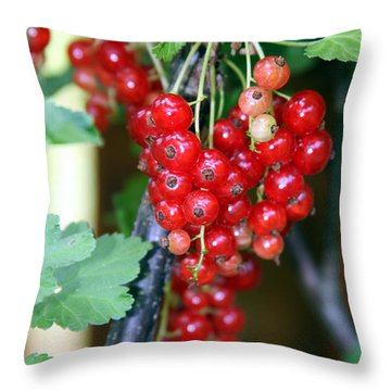 Throw Pillow featuring the photograph Ready To Eat Berries by Vadim Levin