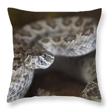 A Rattlesnake Thats Ready To Strike Throw Pillow