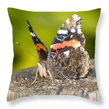 Red Admiral Butterfly Throw Pillow by David Lee Thompson