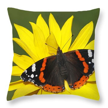 Red Admiral Butterfly Netherlands Throw Pillow