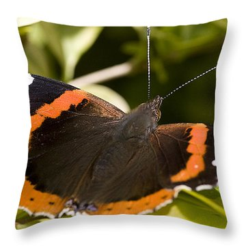 Red Admiral Butterfly Throw Pillow by Richard Thomas