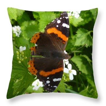 Throw Pillow featuring the photograph Red Admiral In Toronto by Lingfai Leung