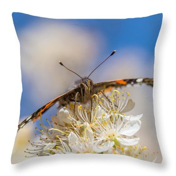 Red Admiral Butterfly On Plum Blossoms Throw Pillow