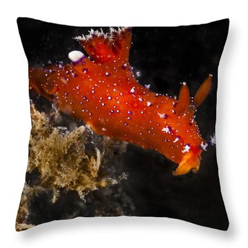 Red And Purple Throw Pillow