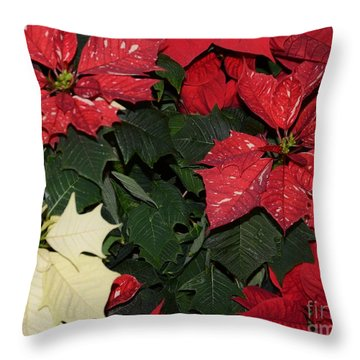 Red And White Poinsettia Throw Pillow by Kathleen Struckle