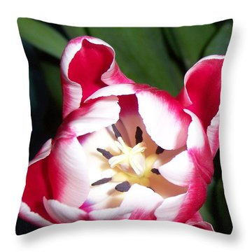 Red And White Tulip  Throw Pillow by Nora Boghossian