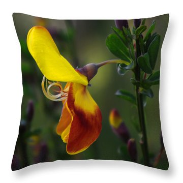 Red And Yellow Scotchbroom Throw Pillow by Adria Trail