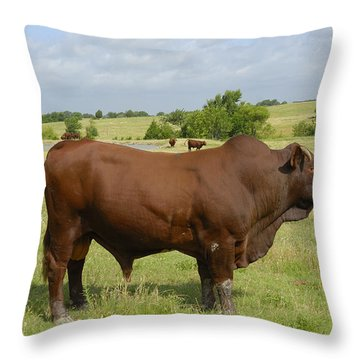 Red Angus Bull Throw Pillow