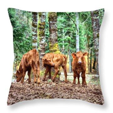Red Angus Calves Throw Pillow