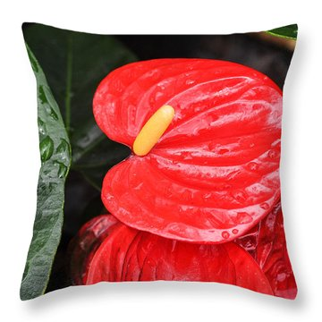 Red Anthurium Flower Throw Pillow by Denise Bird
