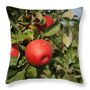Red Apple Growing On Tree Throw Pillow