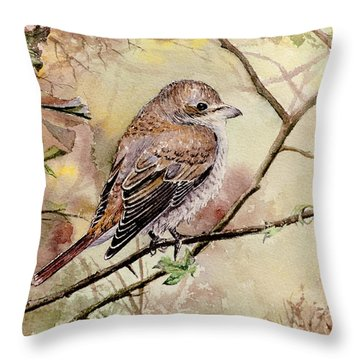 Red Backed Shrike Throw Pillow by Andrew Read