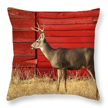 Red Barn Buck Throw Pillow