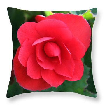 Red Begonia Throw Pillow by Sergey Lukashin