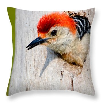 Red-bellied Woodpecker II Throw Pillow by William Beuther