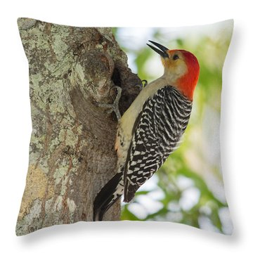 Red-bellied Woodpecker Throw Pillow by John M Bailey