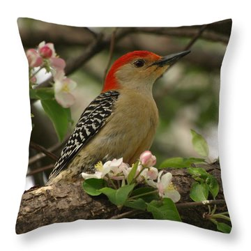 Throw Pillow featuring the photograph Red-bellied Woodpecker by James Peterson