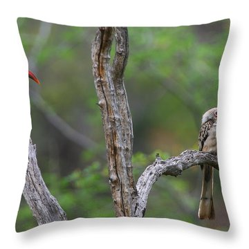 Red-billed Hornbills Throw Pillow