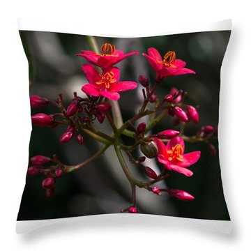 Red Jatropha Blossoms Throw Pillow