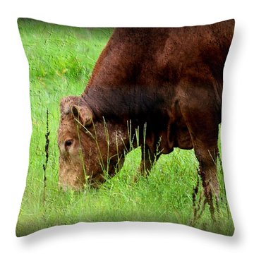 Red Brangus Bull Throw Pillow