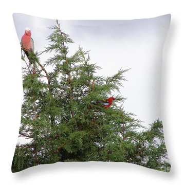 Red-breasted Cockatoos And Crimson Rosellas Throw Pillow by Bev Conover