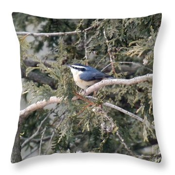 Throw Pillow featuring the photograph Red Breasted Nuthatch by Brenda Brown