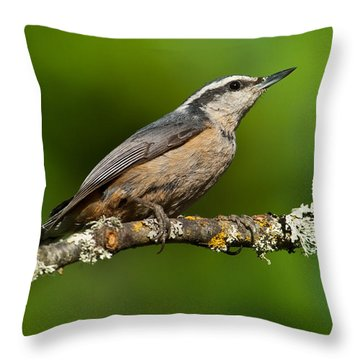 Red Breasted Nuthatch In A Tree Throw Pillow