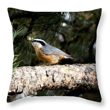 Red-breasted Nuthatch In Pine Tree Throw Pillow