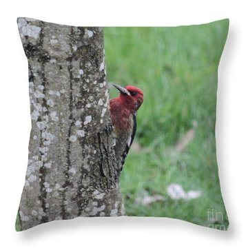 Red Breasted Sapsucker Throw Pillow by Erica Hanel