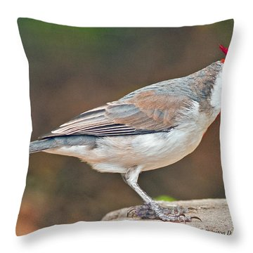 Red-capped Cardinal Throw Pillow