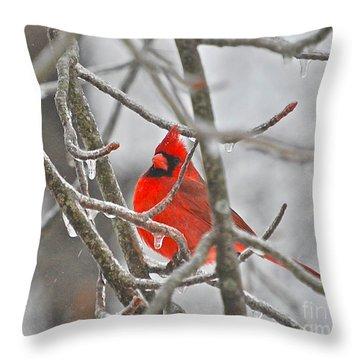Red Cardinal Northern Bird Throw Pillow