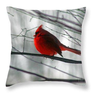 Red Cardinal On Winter Branch  Throw Pillow by Karen Adams