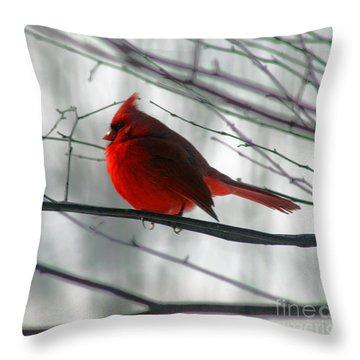 Red Cardinal On Winter Branch  Throw Pillow