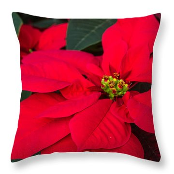 Red Christmas Beauty Throw Pillow