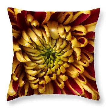 Red Chrysanthemum Throw Pillow by Matt Malloy