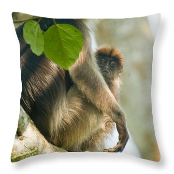 Red Colobus Monkey With Its Young One Throw Pillow