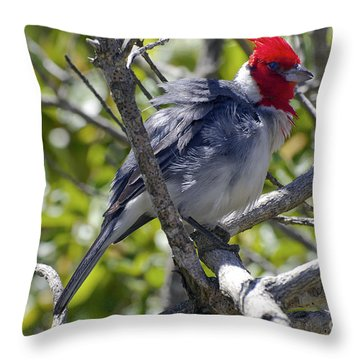Red Crested Cardinal Throw Pillow by Bob Phillips