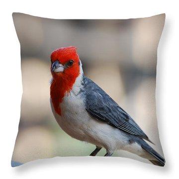 Red Crested Cardinal Throw Pillow by DejaVu Designs
