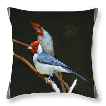 Red-crested Cardinal Throw Pillow by Walter Herrit