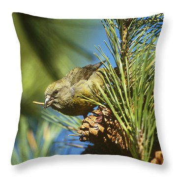 Red Crossbill Eating Cone Seeds Throw Pillow