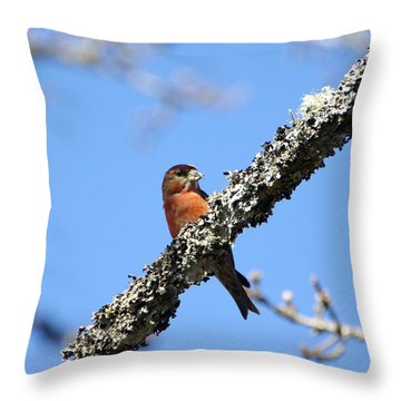 Red Crossbill Finch Throw Pillow