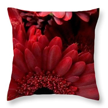Red Daisies Throw Pillow by Danielle  Parent