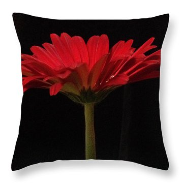 Red Daisy 4 Throw Pillow
