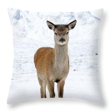 Red Deer In Snow Throw Pillow