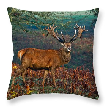 Red Deer Stag In Woodland Throw Pillow by Scott Carruthers