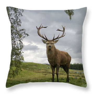 Throw Pillow featuring the photograph Red Deer Stag by Phil Banks